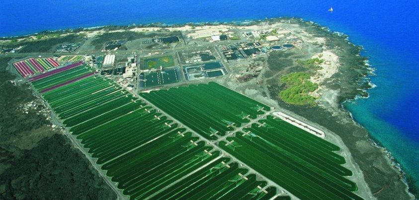 Spirulina farm Hawaii