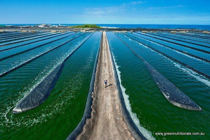 Spirulina Aqua farm in Hawaii
